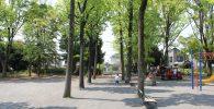 遊具広場の並木