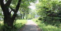 公園内の散歩道