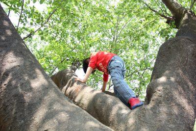 木登りをする児童