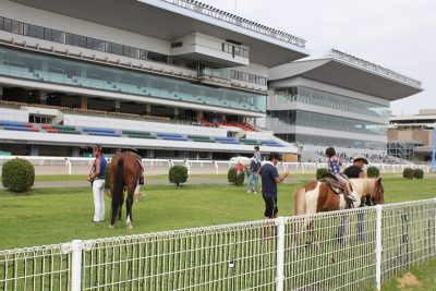 川崎競馬場の乗馬体験コーナー